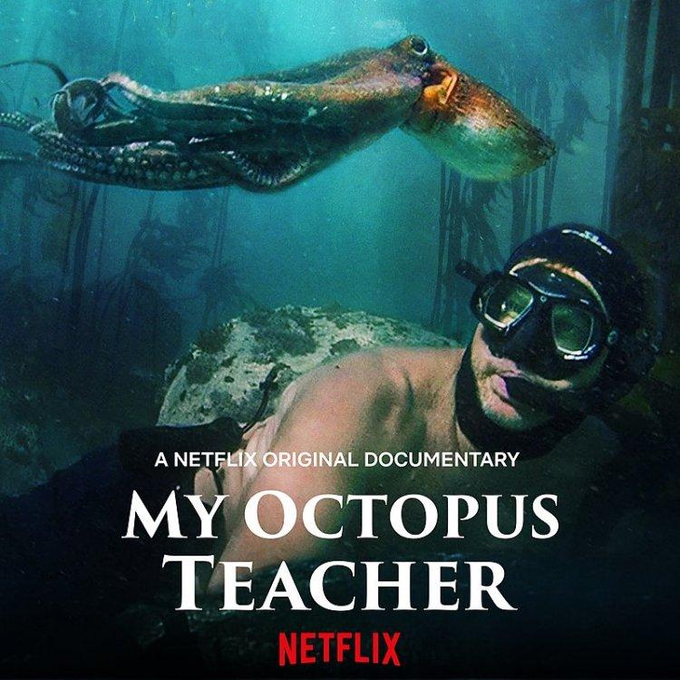 800px-My_Octopus_Teacher.jpg